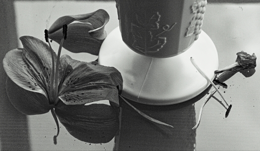 Vase BW HDR