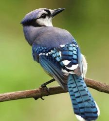 bird-386725_960_720